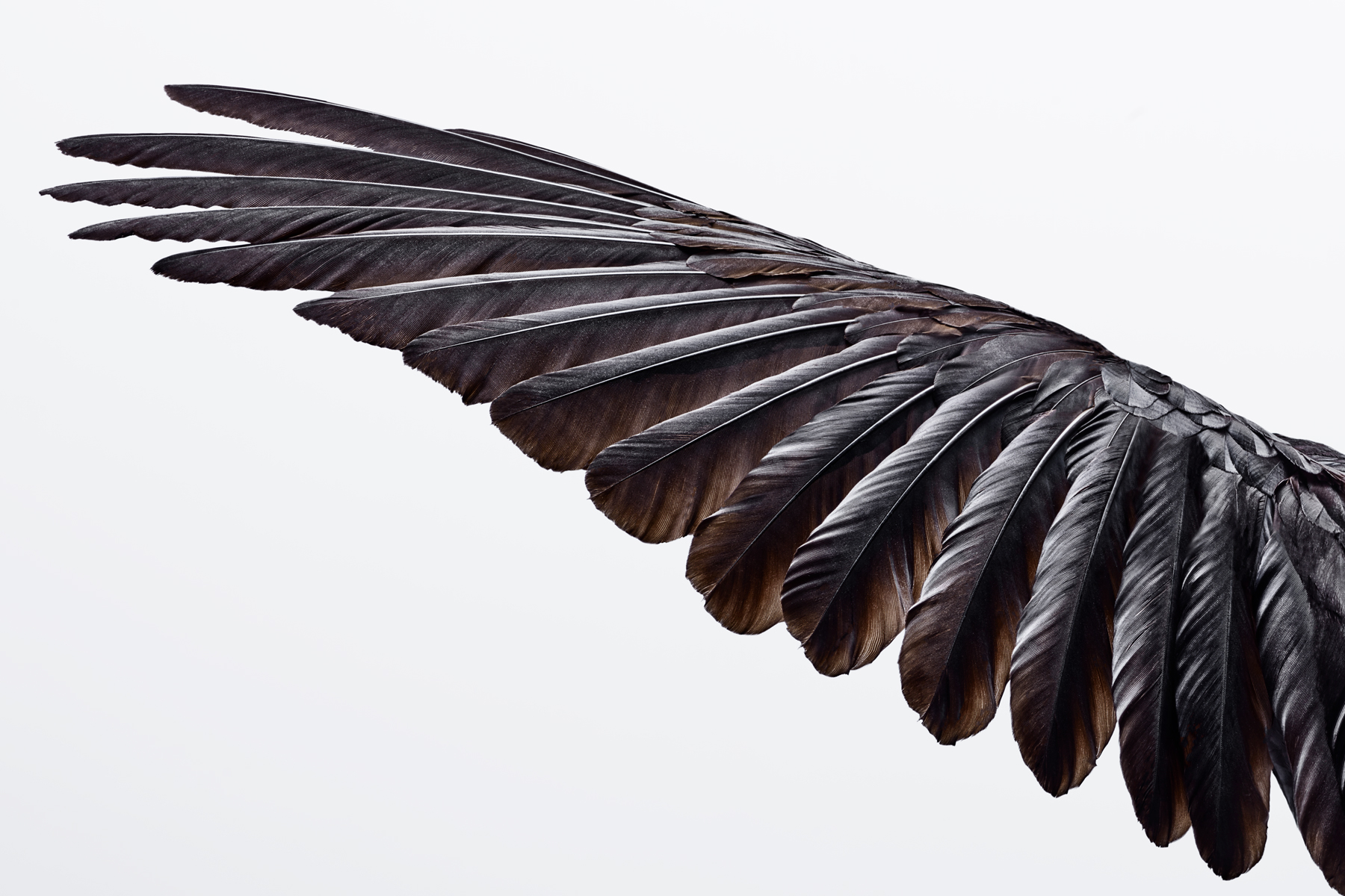 CROW-WING